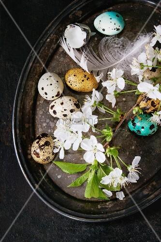 Bunter Wachteleier mit Kirschblüten und Vogelfedern als Osterdeko auf Vintage-Tablett
