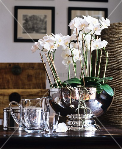 White orchids planted in silver bowl next to glass jug