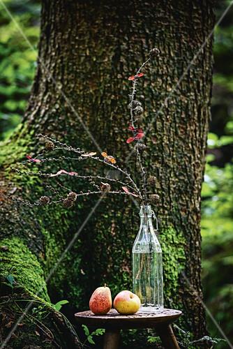 Lärchenzweige in einer Glasflasche vorm Baum im Wald