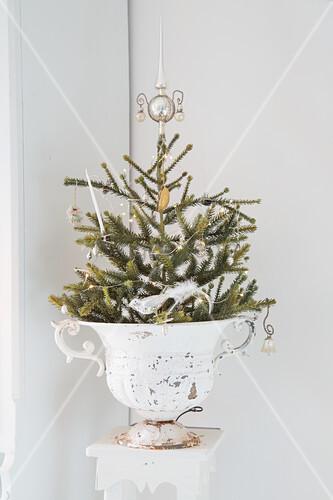 Kleines Weihnachtsbäumchen in einer Amphore mit Patina