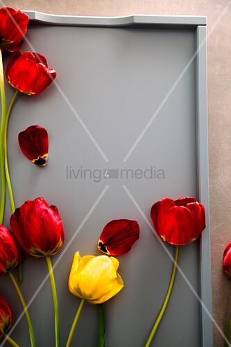 Rote Tulpen auf grauem Tablett