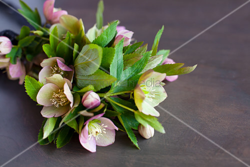 Hellebores on dark surface