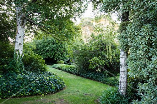 Rasenweg umgeben von Efeubeet im Garten