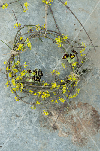 Wreath of primula 'Victoriana Gold Lace' and cornelian cherry blossom