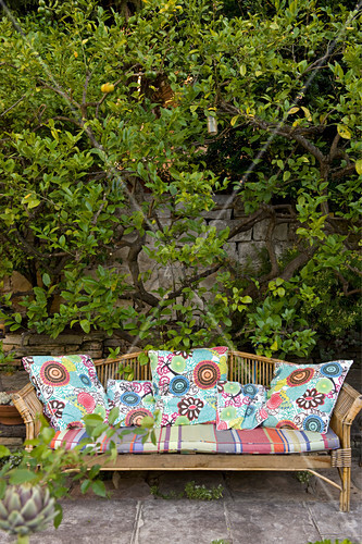 Colourful cushions on garden bench in front of lemon tree against wall