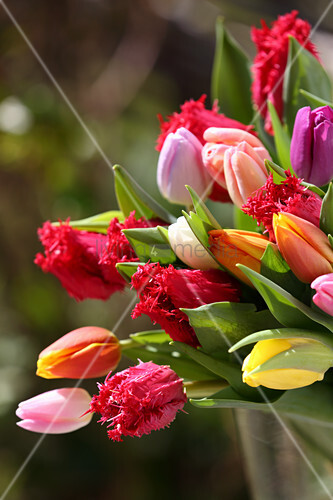 Bouquet of frilled and plain tulips