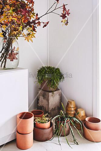 Zweige mit Herbstlaub in Glasvase, Grünpflanzen und Pflanzentöpfe auf dem Boden