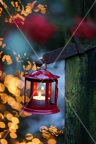 Red candle lantern in garden