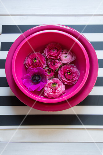 Flowers in hot-pink bowl of water