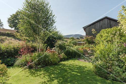 Rasenfläche und Beet mit Birke