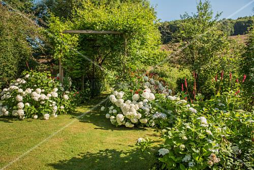 Garten mit blühenden Hortensien