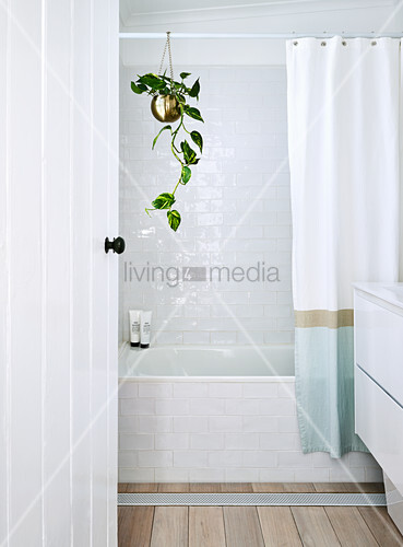 Plant hanging from shower curtain rod above bathtub in bright bathroom