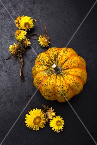 Sweet dumpling squash and yellow everlasting flowers on black surface