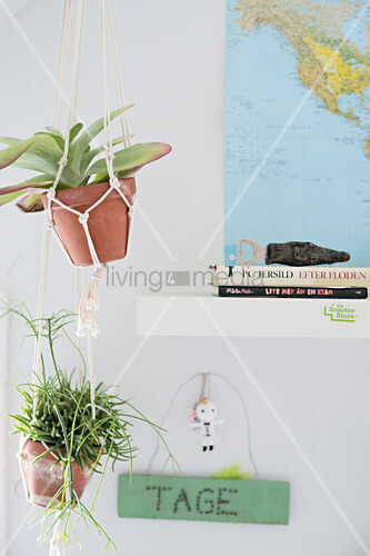 Succulents in terracotta pots in macrame pot hangers