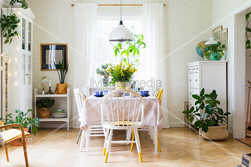 Many house plants and set table in friendly dining room