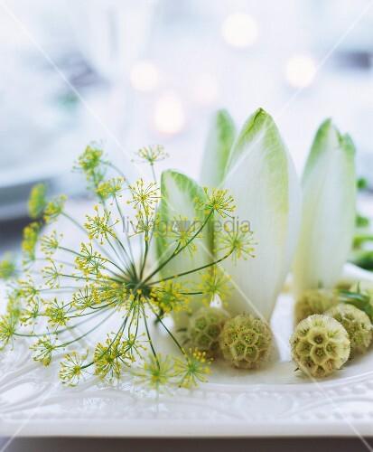 Dillblüte und Chicoreeblätter als Tischdeko