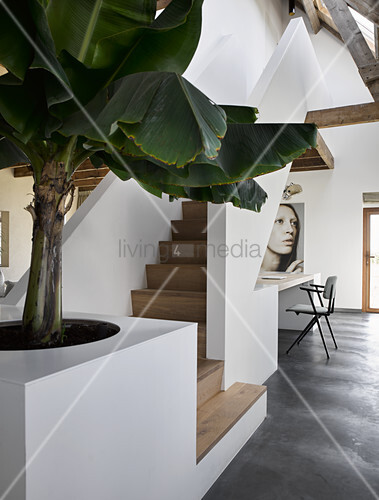 Foliage plant at foot of white staircase with wooden treads