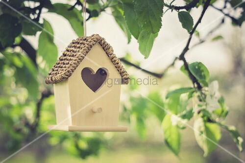 Bird nesting box hanging from apple tree