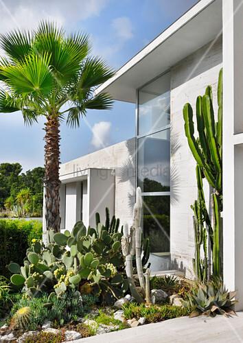 Palme und Kakteen im Steingarten vor modernem Architektenhaus