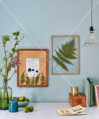 Pressed fern leaves mounted in picture frames behind glass