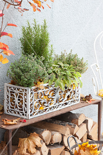 Accented white box with herbs