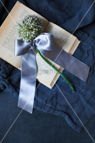 White allium flower tied with satin ribbon on open book