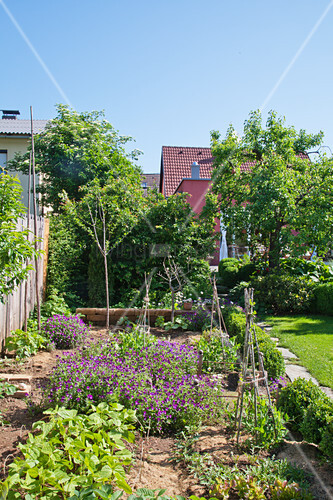 Vegetable patch in sunny cottage garden under a blue sky