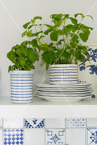 Crockery and herbs on shelf above blue and white wall tiles in kitchen