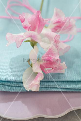 Sweet pea on turquoise cloth