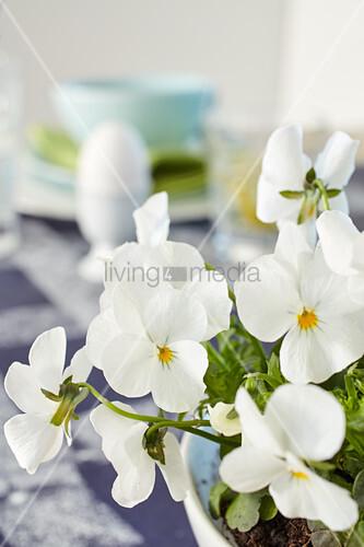 White violas