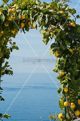 Blick durch mit Zitronen bewachsenens Rundbogen auf das Meer