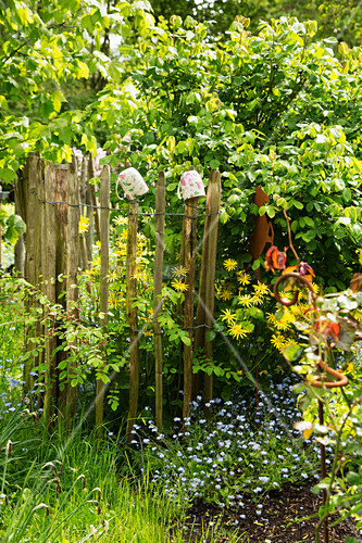 Chestnut paling fence in garden in early summer