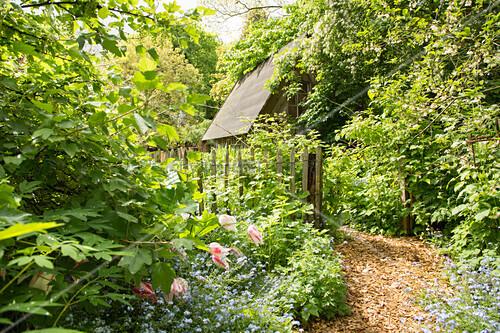 Mulched garden path leading through garden in early summer