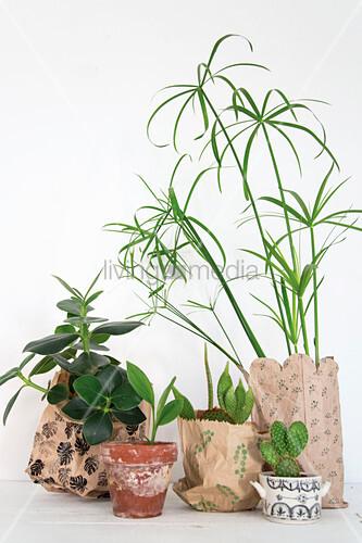 Gruppe verschiedener Pflanzen in bedruckten Papiertüten