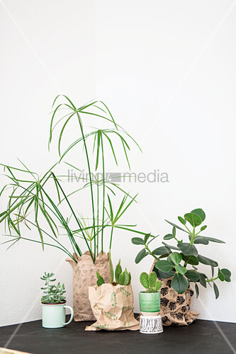 Studio shot, interior, DIY, idea, crafting, printing, print, prints, stamps, stamping, decoration, recycling, upcycling, paper, bag, leaf, green, white, white background, plant, houseplant. copy space, cacti