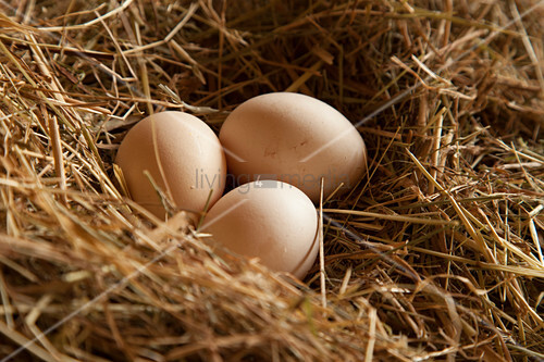Three fresh brown hen's eggs lying in hay