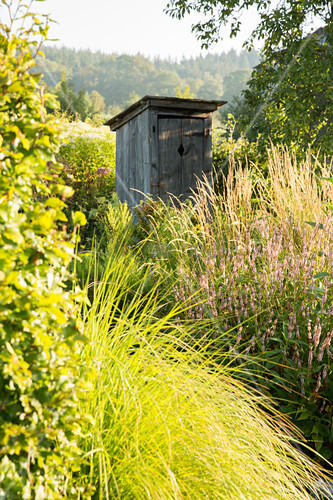 Rustic wooden outhouse amongst shrubs and grasses