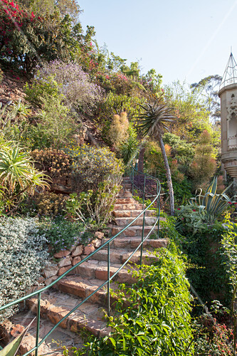 Climber-covered stone steps in terraced garden