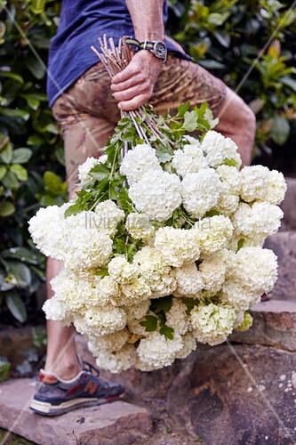 Mann trägt einen üppigen Strauß weißer Hortensien durch den Garten