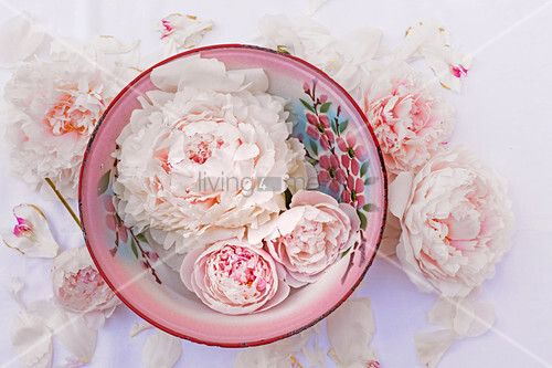 Peony flowers and buds in painted enamel bowl