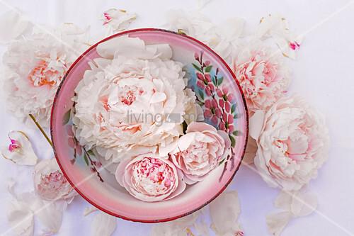 Pfingstrosenblüten und Knospen in bemalter Emailleschale
