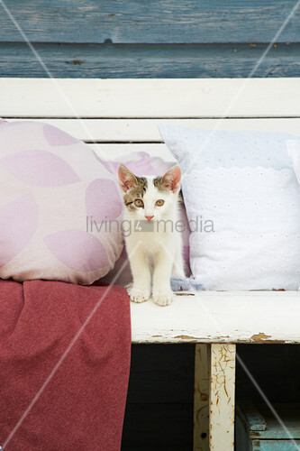 Cat between cushions with hand-sewn covers on bench