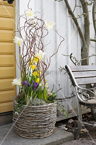 Spring flowers decorated with feathers in wicker planter next to front door