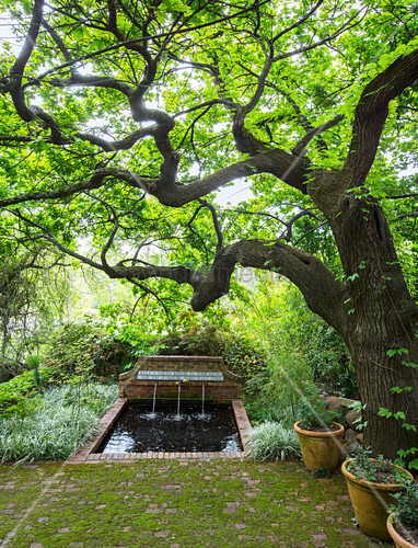 Small pond with spouts and Chinese proverb under old oak