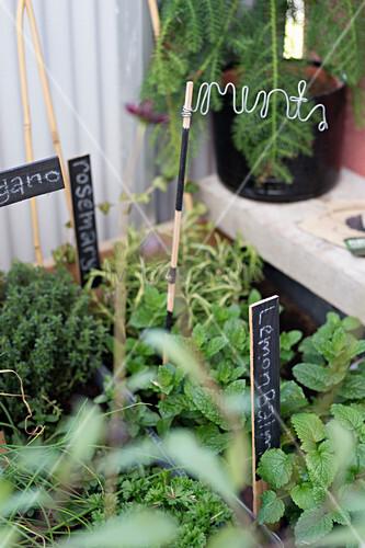 Various herbs on balcony
