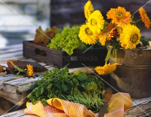 Stillleben mit jungem Portulak, Blumen im Eimer & Salat