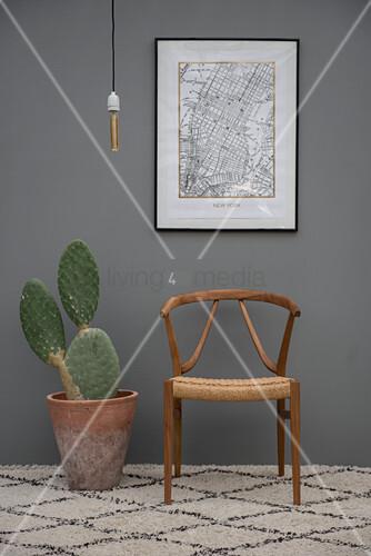 Kaktus im Terracottatopf und Designerstuhl vor grauer Wand