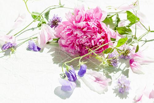 Rosa Pfingstrose und lilafarbene Wickenblüten