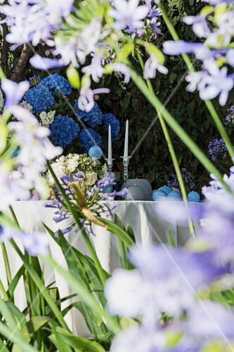 Blick auf blaue Hortensien im Garten