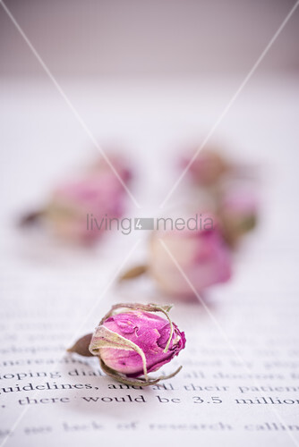 Dried rose buds on book page